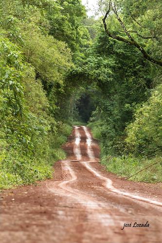 Encantos de la Argentina !!!Parque Nacional Iguazú . Y sus rutas por el interior de la selva!!!