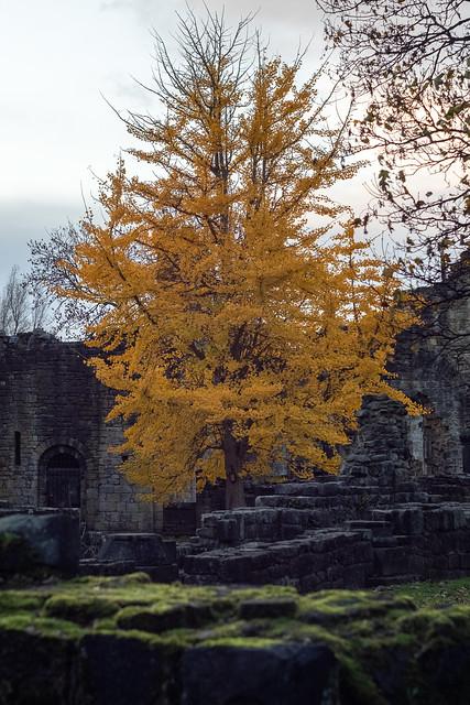 Autumn Evening at Kirkstall Abbey