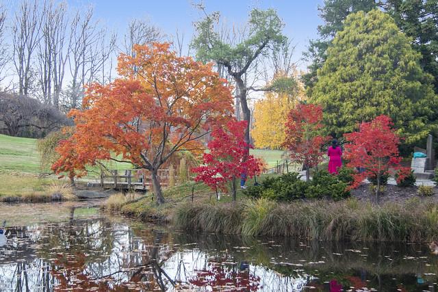 Brookside Gardens Nov 10 2020 (647)