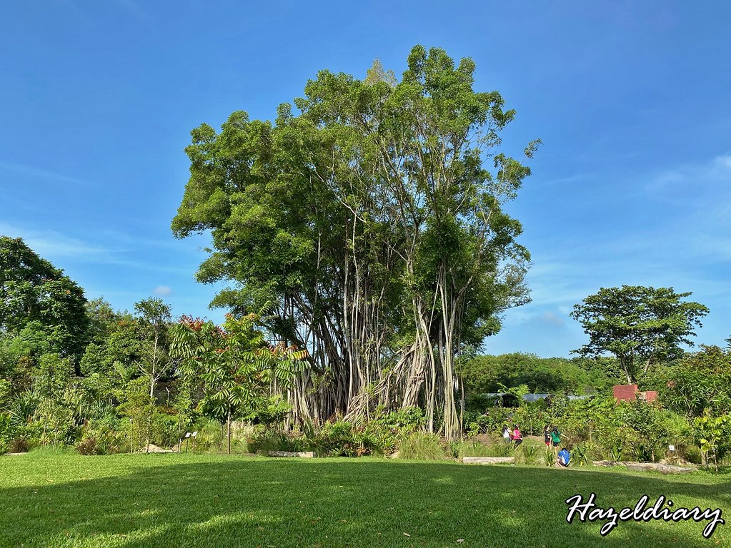 Sembawang Hot Spring Park Singapore-Banyan Tree