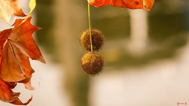 #Autumn - 9081