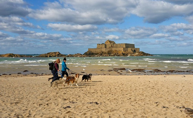 Saint-Malo / Grande Plage du Sillon  - The pack of dogs