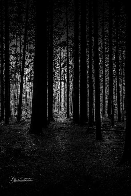 In dark woods where your inner demon waits ...