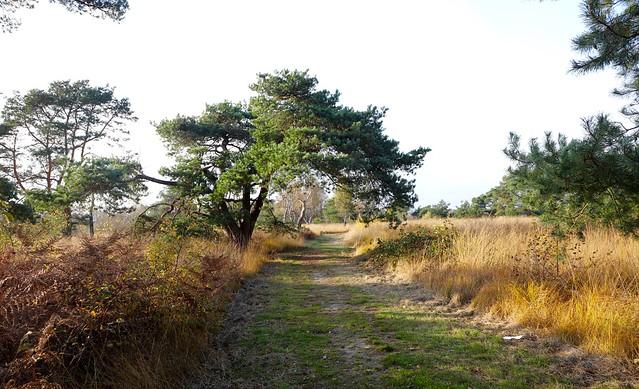 Nationaal Park De Groote Peel / Ospel