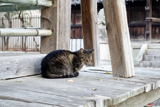 Today's Cat@2020−11−16