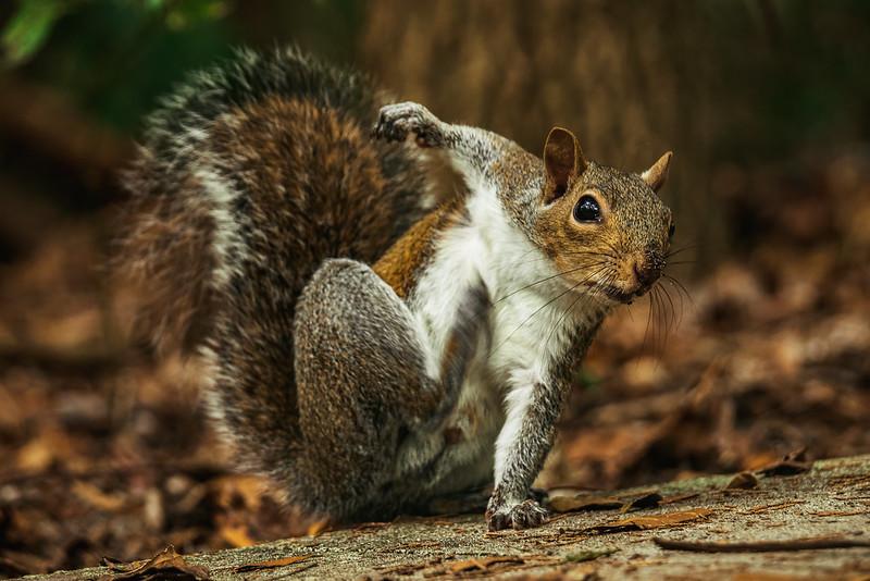 Squirrel Superhero Landing