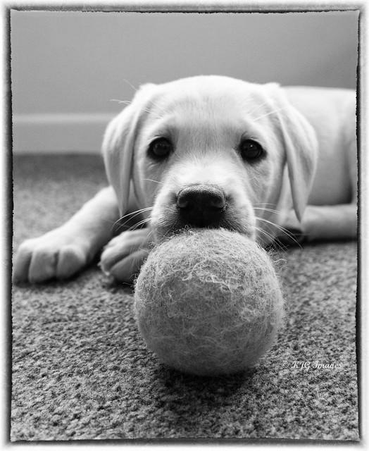 My Tennis Ball