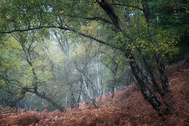 Woodland Colour 4