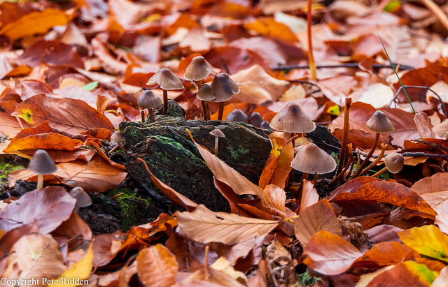 Autumnal floor