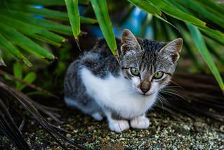 Cats-0828