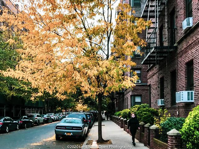 Autumn Foliage (Day 228)