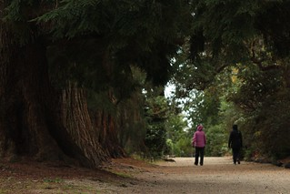 The Broad Walk, Fernhill, with the Wellingtonias