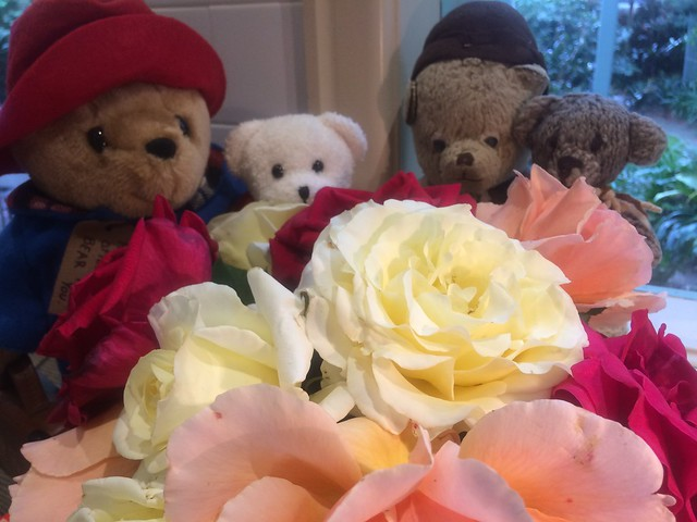 Paddington and Scout Stop to Smell the Roses
