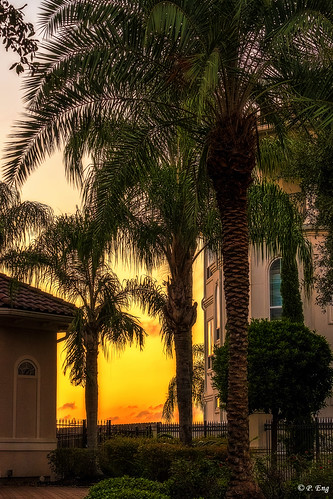 landscape composition flickr photography nature outside outdoor scenery travel travelphotography fujifilm mirrorless palmtree tree houston southshoreharbor sunset texas tx palm