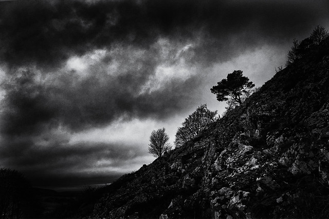Trees on a steep Hillside [Explore]