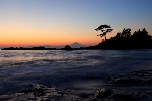 Mt.Fuji & Pine Tree