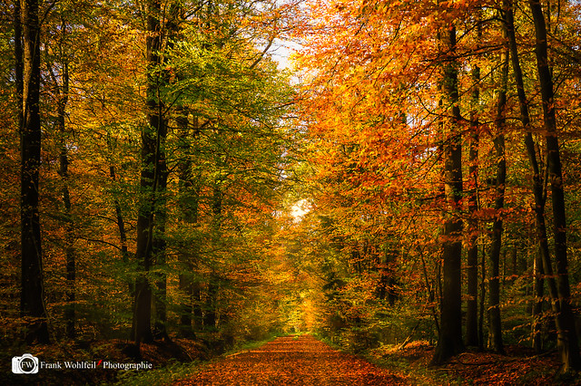 Indian Summer in Ahaus