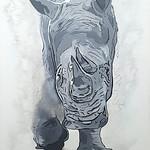 Z's White Rhino