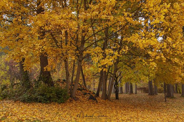 Finch Autumn Colors