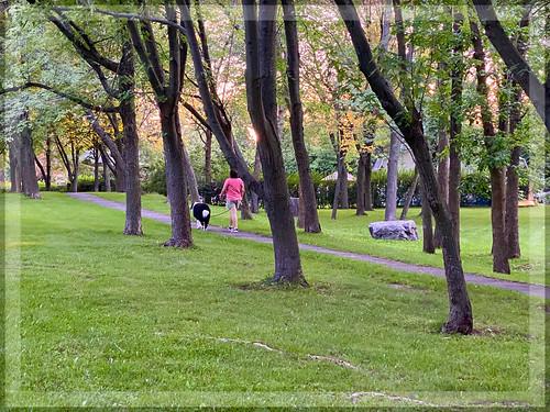 localparkview park parkscenes parks walkway walkers trees treesilhouettes treebranches tree grass greenery gardenscenes outdoors outdoorscenes montreal montrealsuburb fall fallscenes dog dogwalker