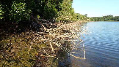 Seringat mangrove lagoon