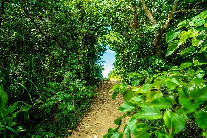 石垣島のビーチへ続く道