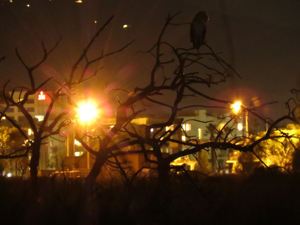 Tyto and stray light