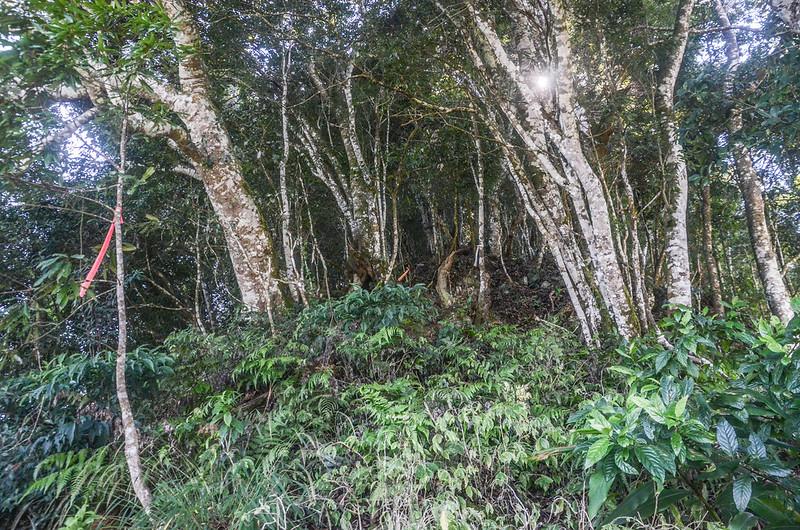 鹿湖山雜木林寬稜