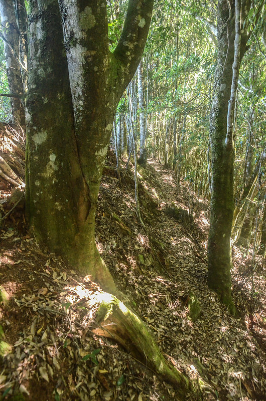 鹿坑山崩壁瘦稜 (2)