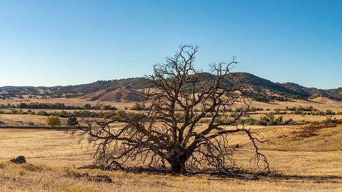 santaysabelcountyreserve santaysabelcountyreserveeast sandiegocounty socal outside sunny oaktree gnarly burnt deadtree landscape