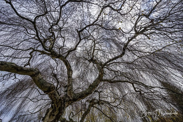 Nature's Canopy
