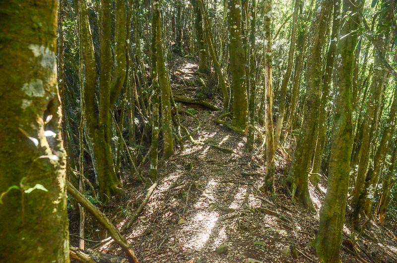 鹿坑山優美林相稜線 (3)