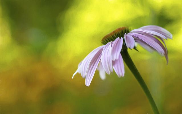 Wild Flower......Explore