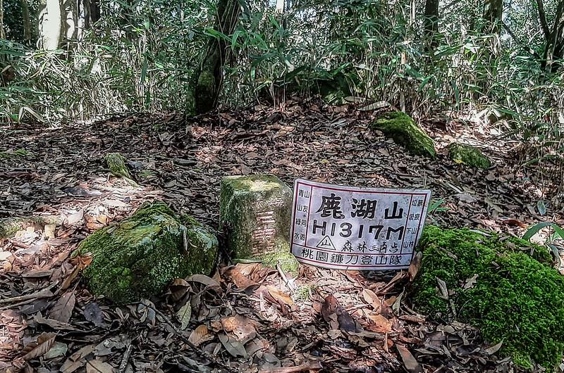 鹿湖山冠字補川(14)森林三角點(Elev. 1317 m) (2)