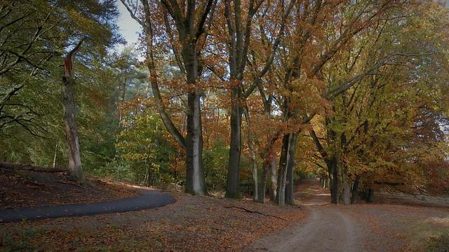 Planken Wambuisweg.