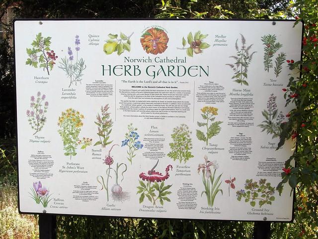 The Bishop's herb garden