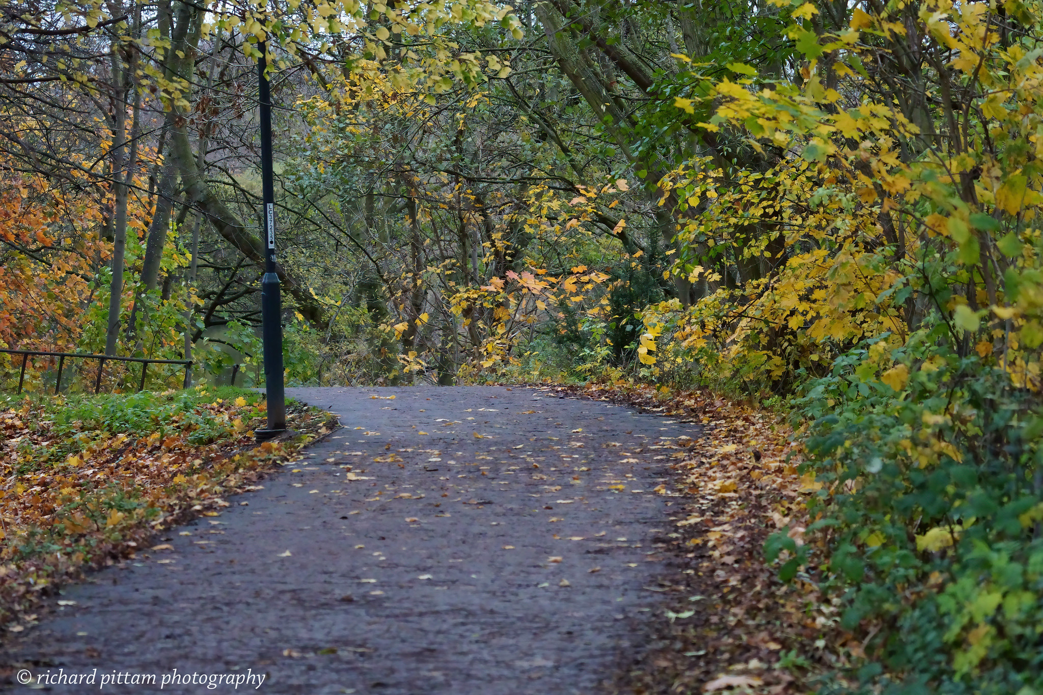 Riverbank foliage