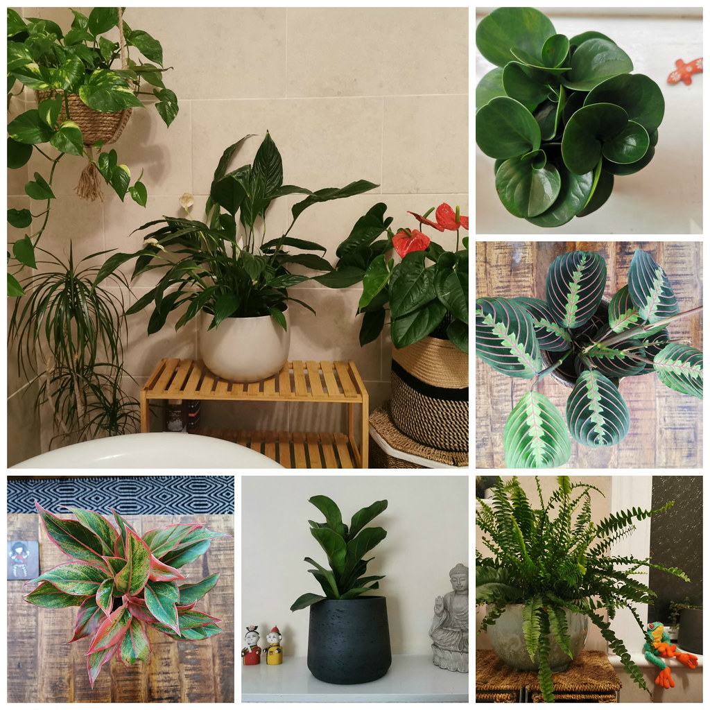 A few members of my plant family from Patch Plants