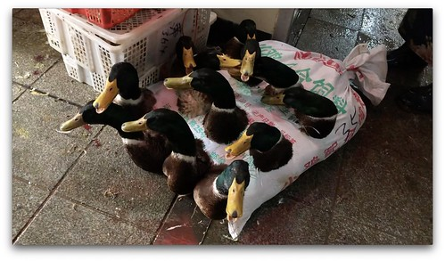 Investigating Wet Markets in China - November 2020_I | by Animal Equality International
