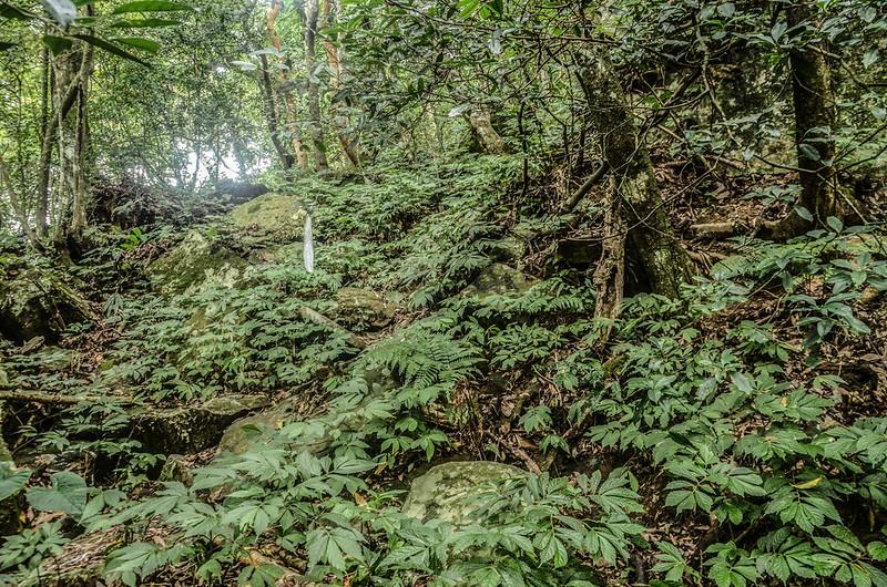 南大龜山亂石陡坡區 (2)