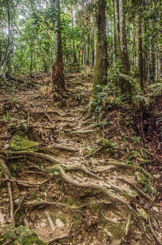 向天湖山登山山徑 (2)