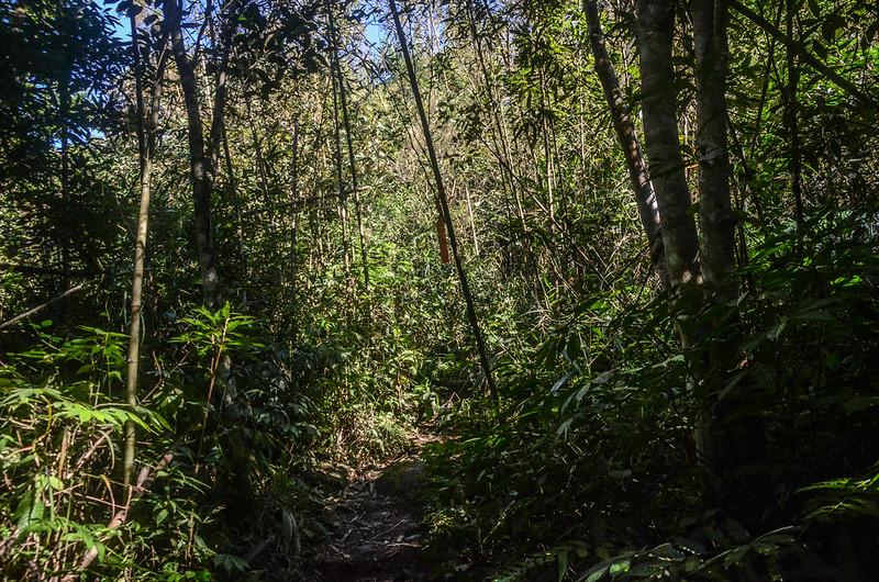三角湖山竹林小徑