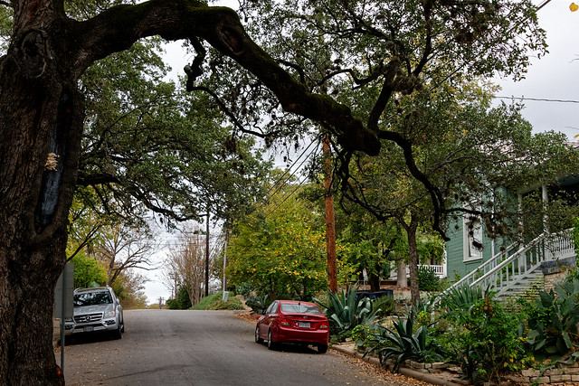 Under an Oak Tree While Walking the Streets of Austin