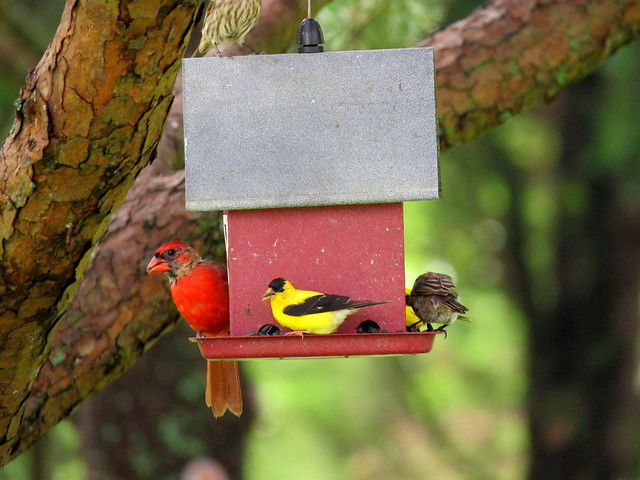 Birds sharing the seed.