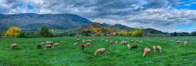Φθινοπωρινό βοσκοτόπι  Autumnal  pasturland