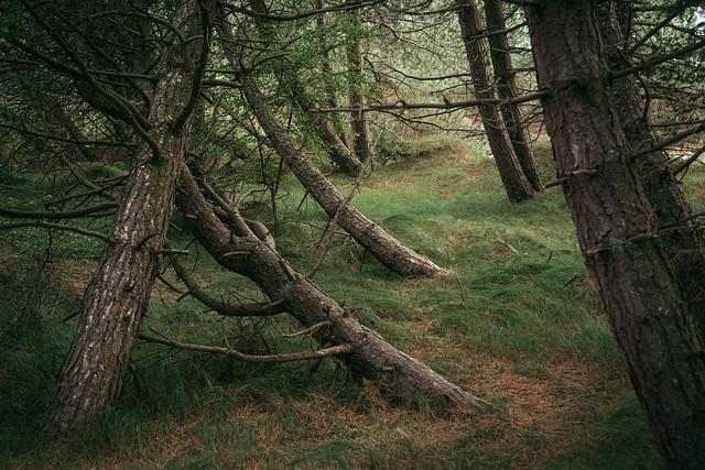Mystische Dünenwälder