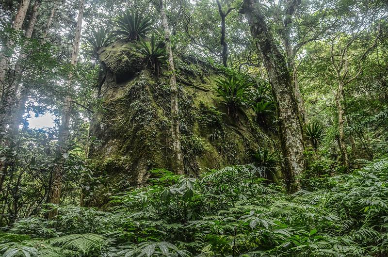 登南大龜山途中路旁巨岩