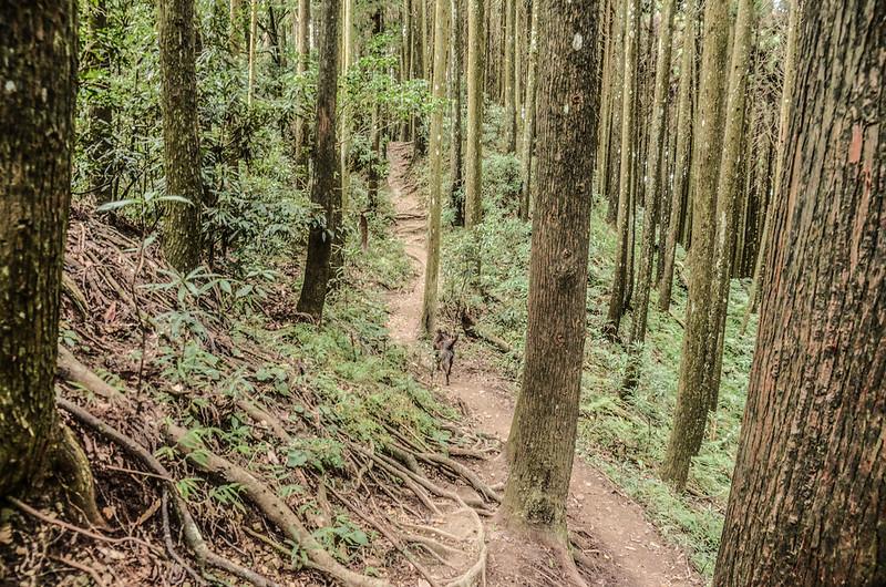 向天湖山登山山徑 (4)