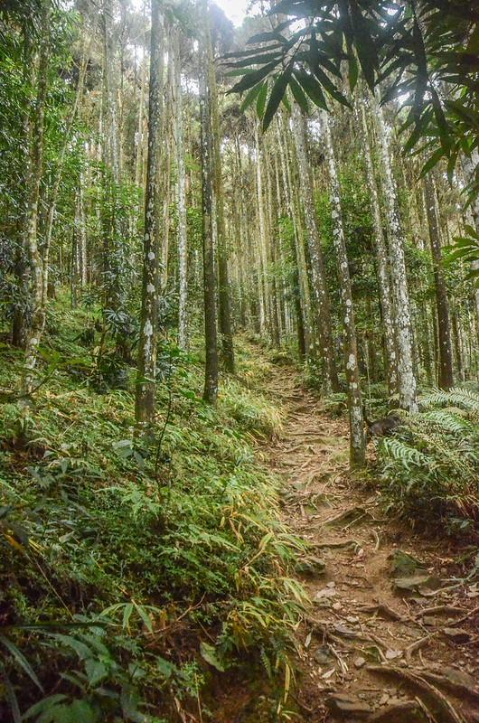 向天湖山登山山徑 (1)