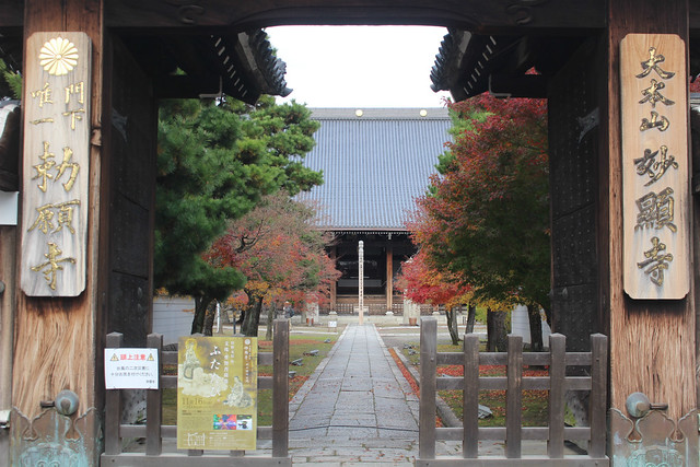 myokenji-gosyuin006